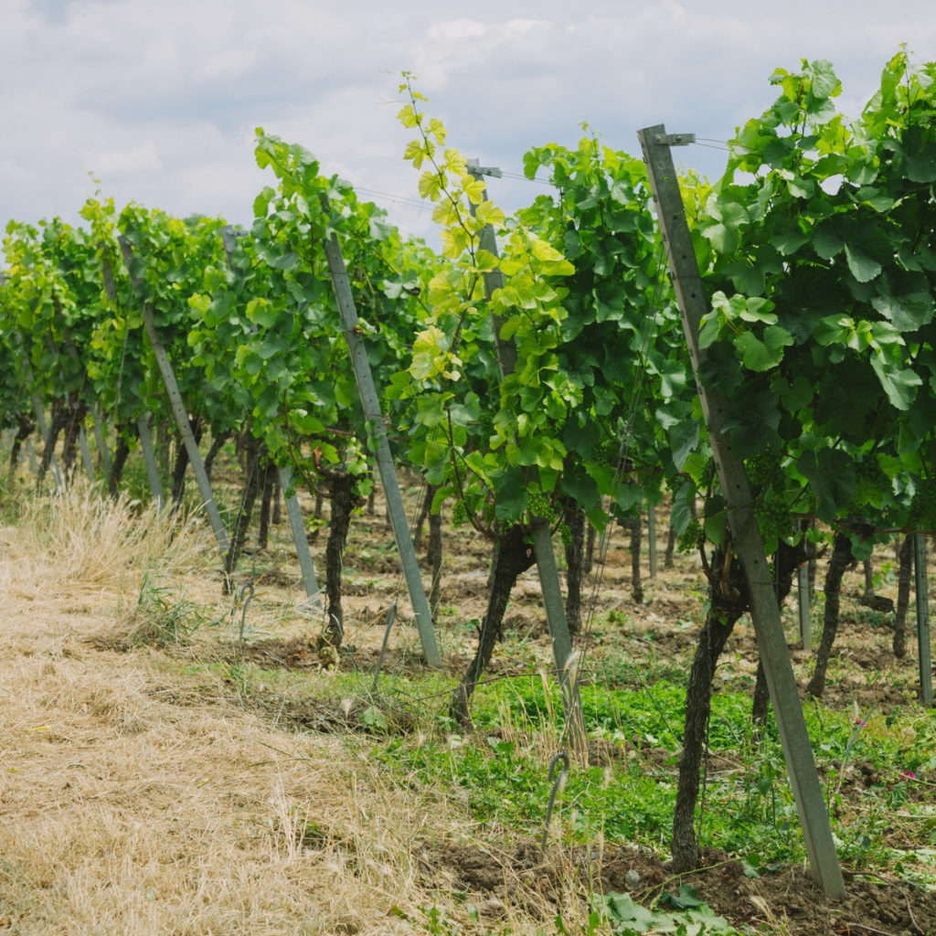 Eakle Vineyard Management